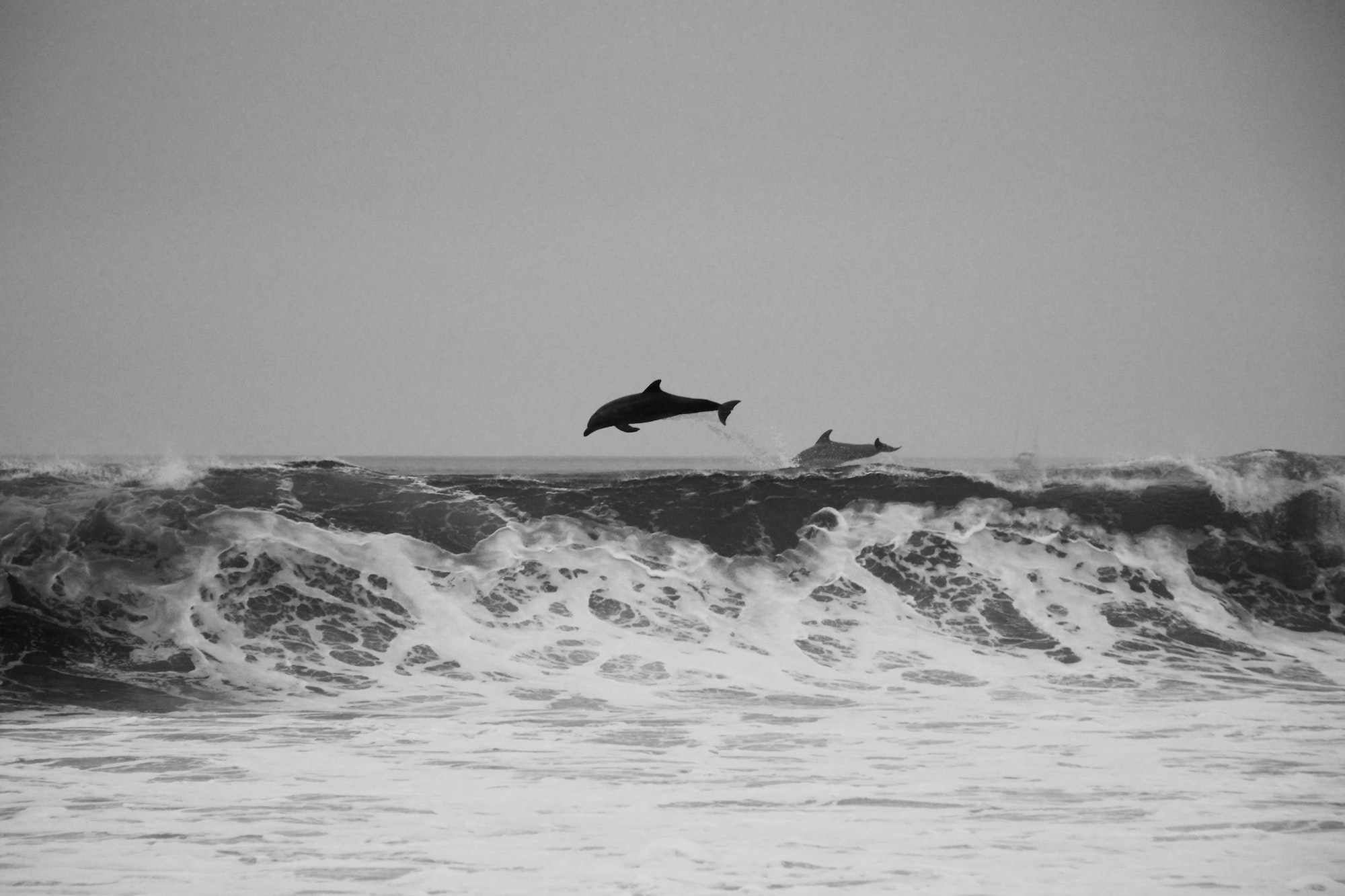 Dolphins playing in the waves